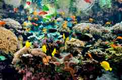 PavillonTropical_PoissonsTropicaux_Oceanopolis_Copyright-Oceanopolis
